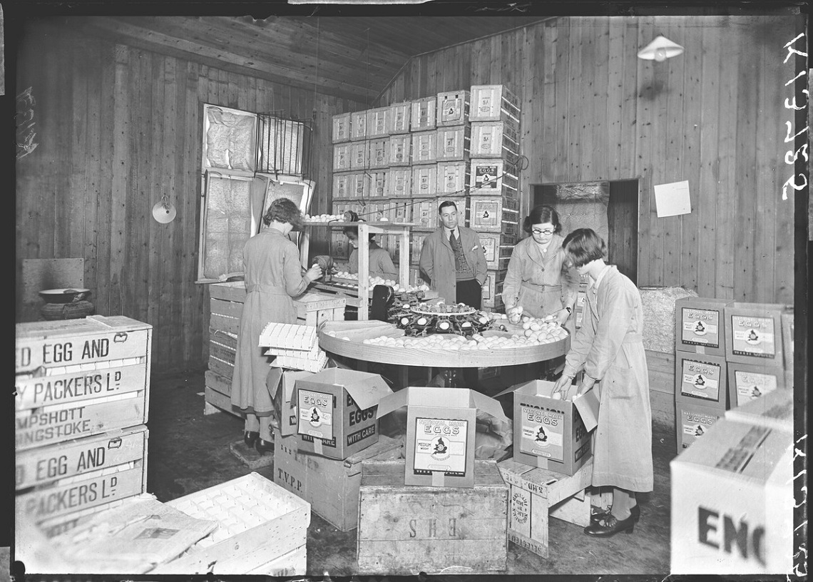 Workers grading or sorting eggs at the Thames Valley Egg Packing Station