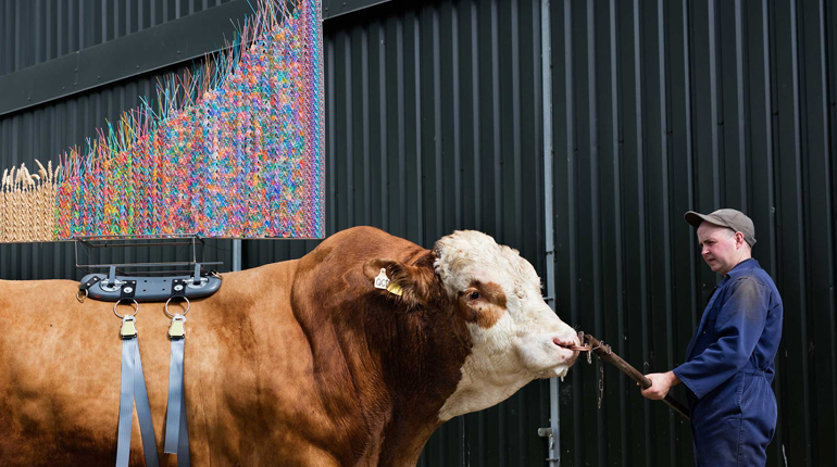 Photograph of large bull with a colourful sculpture on its back from Sire an exhibition by Maria McKinney